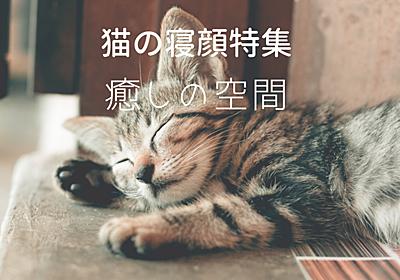【癒しを求めて】猫の寝顔特集 - ノル猫ラテちゃんの気ままBLOG