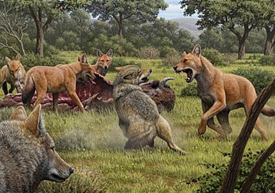 絶滅オオカミ「ダイアウルフ」、実はオオカミと遠縁だった | ナショナルジオグラフィック日本版サイト