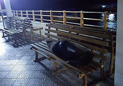 """基本一人旅@スリナム on Twitter: """"ガラパゴスの街中心部の船着場 ベンチで誰か横になって寝てるなーと思ったらアシカだった件 https://t.co/huevRdoqhb"""""""