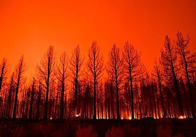 CNN.co.jp : 森林火災多発の北半球、二酸化炭素の放出量が過去最高を記録 - (1/2)