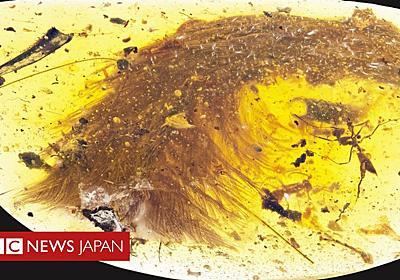 「美しい」恐竜のしっぽが琥珀の中に 羽根がはっきり - BBCニュース
