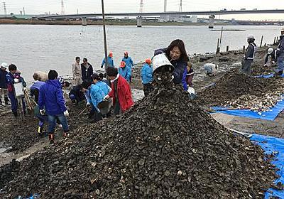 河川敷にカキ殻100トン 中国人投棄、転倒でけがも 地元住民ら回収作業 市川の江戸川放水路 | 千葉日報オンライン