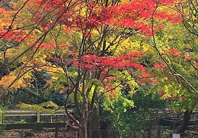 紅葉の伊豆など・・・・。 - schunの日常