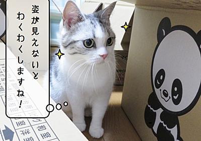猫雑記 ~猫様達のダンボールハーレム~ - 猫と雀と熱帯魚
