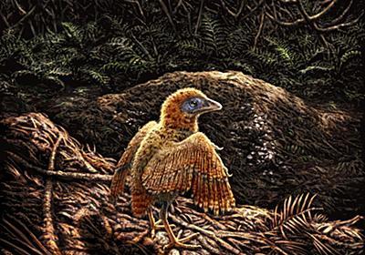 白亜紀の鳥、生まれてすぐに走れたことが判明 | ナショナルジオグラフィック日本版サイト