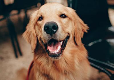 私の犬が死んだ朝、彼にとっては単なる「犬」だったと気づいた話|@DIME アットダイム