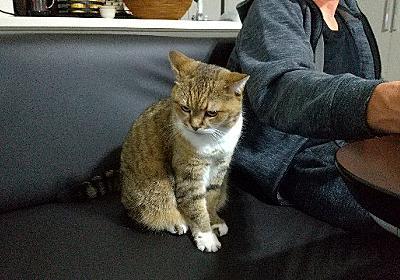 マイケルおとうさん。 - 続・猫とわたしの気まま日記。