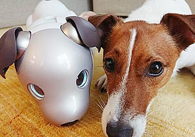 ソニーが犬とアイボの共生実験 「生き物」と認識 「順位付け」も - ITmedia NEWS