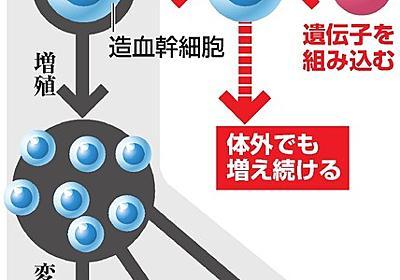 血液つくる細胞、無限増殖の方法開発 理研・京大など:朝日新聞デジタル