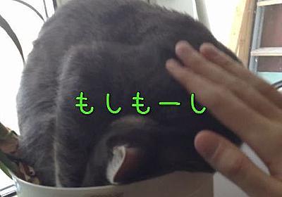 「うちの猫、植木鉢で寝てる…いくらなんでも苦しくないのかな?」→起こしてみた結果(動画):らばQ