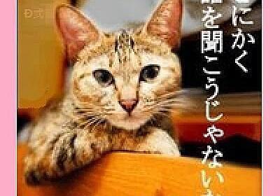 """夢猫😷 on Twitter: """"フェミ「障害者は興行して人前に出て自立して稼ぐな。大人しく福祉をもらって静かに暮らせ」 #小人プロレス https://t.co/zGuOrac9Rx"""""""
