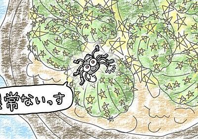 理由を知れば、なるほど益虫?サボテンを警備していたアダンソンハエトリ【クモ】 - とにかくサボテン!