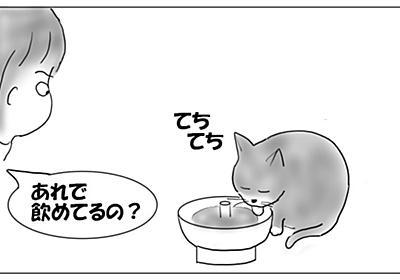 水分補給は、基本中の基本 - 猫とビー玉