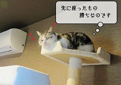 猫雑記 ~むくだけの秘密基地~ - 猫と雀と熱帯魚