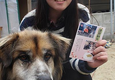 熊本地震:被災犬「おどろき君」と命名 山口で元気 - 毎日新聞