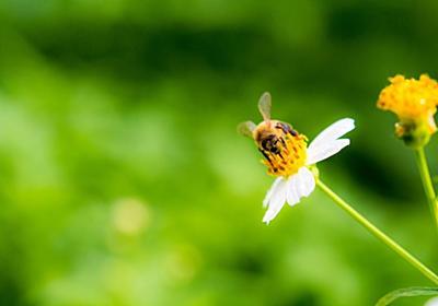 【地球温暖化×コーヒー×ミツバチ】30年後も美味しいコーヒーが飲みたい!!もっと、ミツバチの力を - コーヒーとはちみつと私