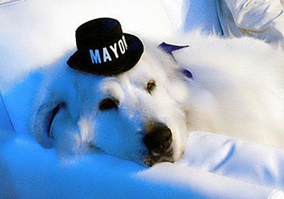 かわいすぎる犬の市長、圧倒的支持で3選を果たす(画像) | ハフポスト