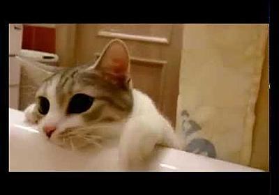 Кошка спасает хозяйку/The cat saved the owner