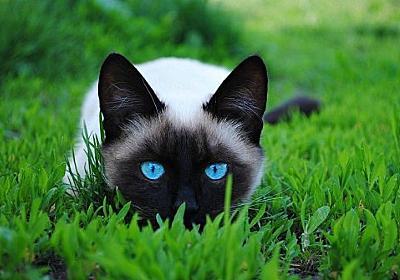 【Tumblr Posts】 Tumblr 2015年7月まとめ 【猫】 | mutter