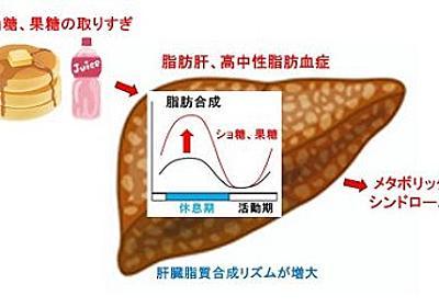 砂糖の取り過ぎで中性脂肪をためやすくなるメカニズムを解明 - MONOist(モノイスト)