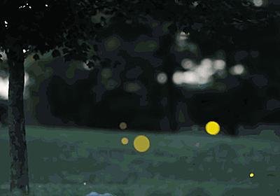 ホタルの発光原理に新説、余剰電子が関与   ナショナルジオグラフィック日本版サイト