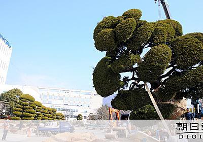 日本名の樹木、韓国で植え替え 「日帝時代の残滓」指摘:朝日新聞デジタル