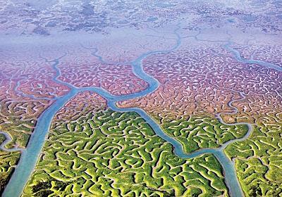 驚くほど脳と似ている。「自然の脳」と呼ばれる沼地(スペイン) : カラパイア