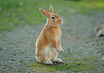 押したら1/2の確率で1億円もらえるが1/2でウサギになるボタン:(*゚∀゚)ゞカガクニュース隊
