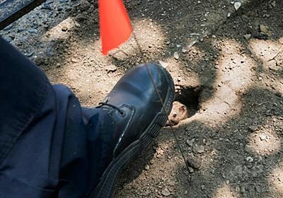 ネズミ駆除の新しい武器はドライアイス、米ニューヨーク 写真15枚 国際ニュース:AFPBB News
