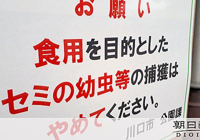 「食用」でセミの幼虫捕らないで 公園に出現の看板話題:朝日新聞デジタル
