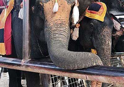 象の背中からアユタヤ遺跡観光しました!おすすめオプショナルツアーも。