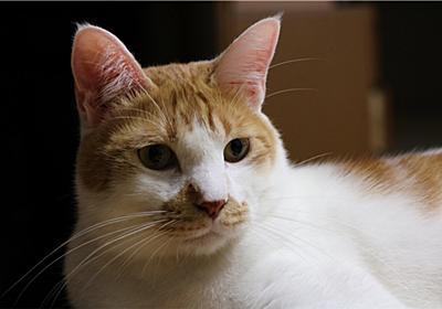 猫と静電気 - ミュウとシャケのぬくぬく日記
