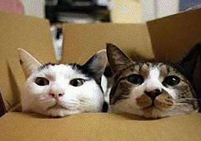 実際のところ猫は飼い主のことをどのように思っているのだろうか?「大きな猫、でも敵じゃない」。と思っているらしい。(英研究) : カラパイア