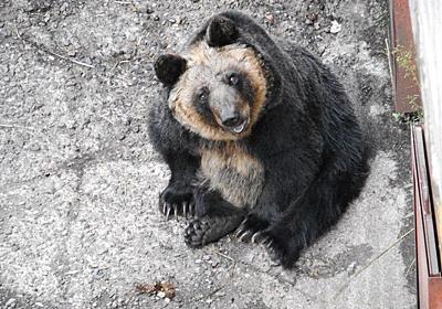 クマ牧場跡地に「1頭が悪環境で放置されている」写真が話題 札幌市が「誤解」と否定 健康状態も良好 - ねとらぼ