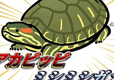 日本のツイッター『アカピッピミシミシガメ』に1日で侵略された模様「侵略的ネットミーム」「かわいい」 - Togetter