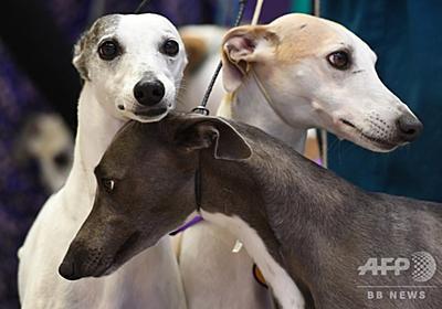 巧みに人を操る「子犬の目」の進化、オオカミにはできない表情 研究 写真3枚 国際ニュース:AFPBB News