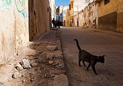 CNN.co.jp : 猫にかまれて狂犬病に感染、モロッコへの渡航者死亡 英当局 - (1/2)