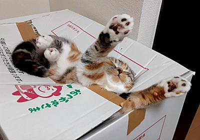 『この状態で寝てる…!』ダンボールに溺れながら健やかにスヤァしている猫さん「電池切れだね」 - Togetter