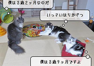 猫雑記 ~2021年7月の猫様体重測定~ - 猫と雀と熱帯魚
