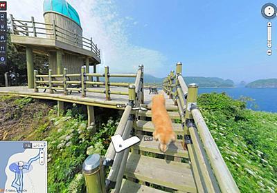 道を案内するワン! 韓国のストリートビューでとある島のどこを見ても写る1匹のワンちゃんが気になる - ねとらぼ
