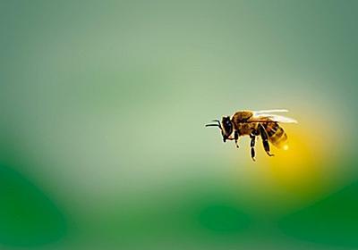 ミツバチが女性を救う。毒に含まれる物質が乳がん細胞を破壊することが判明(オーストラリア研究) : カラパイア
