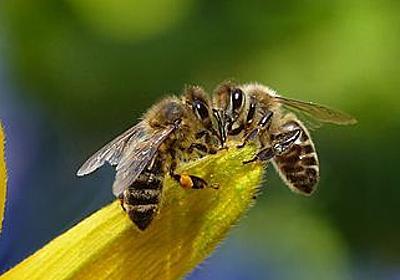 ミツバチは「数」の概念を記号と結び付けて認識できることが判明 - GIGAZINE