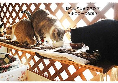 猫用保温ベットの作り方~24h エコ de ホット~ - にゃんころころ猫だまり