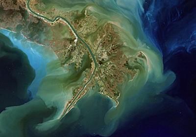 「死の海域」が過去最大規模のおそれ、米国南部 | ナショナルジオグラフィック日本版サイト