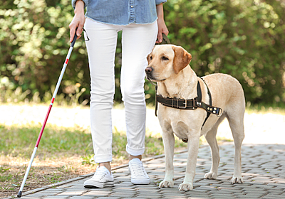 動物愛護家「盲導犬の利用は残酷。野原を自由に走り回らせず人間に服従させることのどこが道徳的なの?」 : ユルクヤル、外国人から見た世界