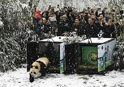 四川省で「パンダ志」が初出版 科学史における発見から150年 写真5枚 国際ニュース:AFPBB News