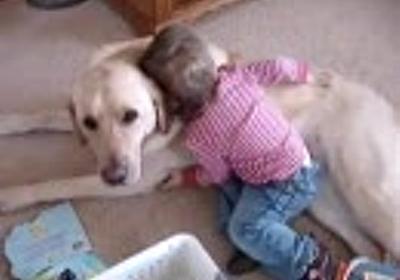 幼児に何をされてもシッポをふる犬