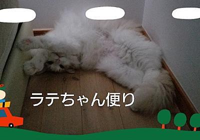 【お知らせ】読者の皆様に感謝の気持ちとラテちゃんの動画について - ノル猫ラテちゃんの気ままBLOG