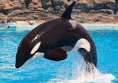 名古屋港水族館を120%楽しむならイベントがおすすめ!シャチとマイワシのトルネードは必見!│観光・旅行ガイド - ぐるたび