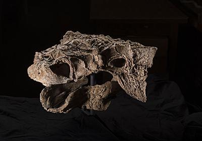 装甲車のような恐竜ズール、頭と尾の化石を公開 | ナショナルジオグラフィック日本版サイト